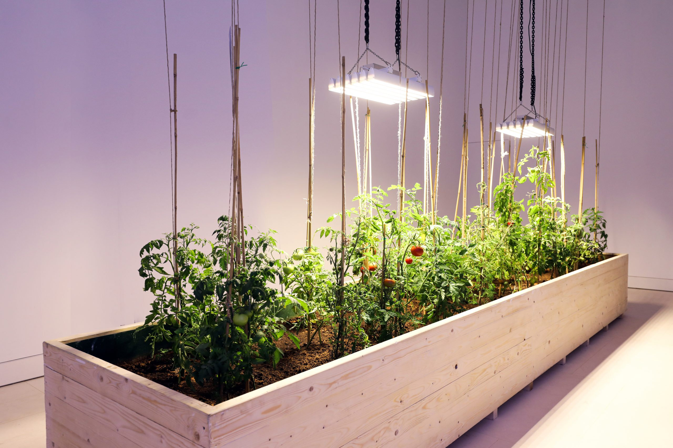 Sarah Abu Abdallah, Trees speaking with each other, 2019, Long container with soil and tomato plants illuminated from above. 60 x 110 x 500 cm.